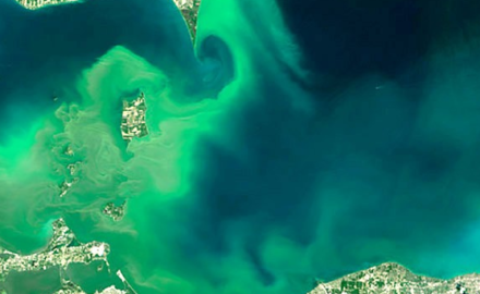 Fertilizer Runoff and Lake Erie's Dead Zone