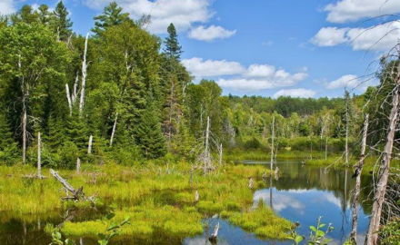 Ontario's Watershed Stewardship Management Plan