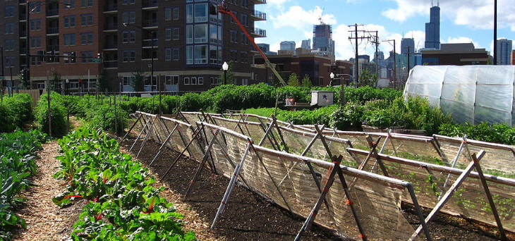 Biosolids Organic Fertilizer Can Revitalize Urban Soils