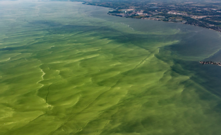High Meat Consumption Contributing to Worsening Algal Blooms