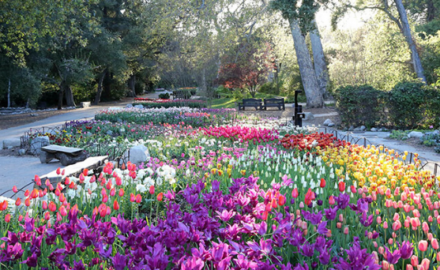 Recycling Wastewater to Irrigate California Botanical Gardens